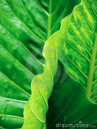 Tropical leaf abstract