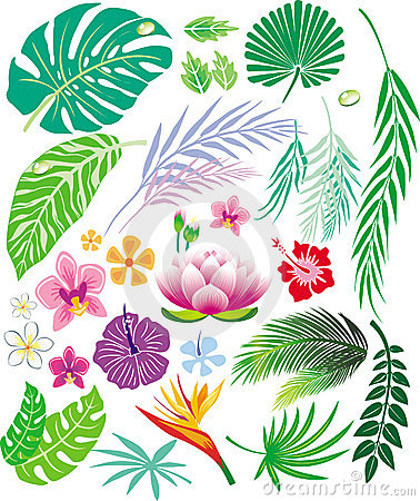 Free Tropical Leaf And Flowers Stock Photo - 10441950