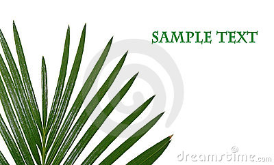 Tropical leaf with space for your text