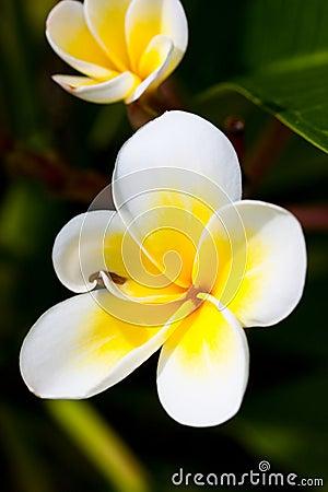 Tropical Lei Flower