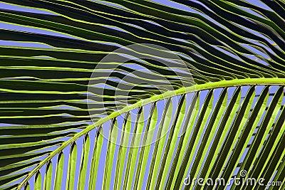 Tropical Maui Palm Tree Frond