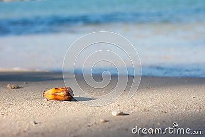 Tropical nut on beach
