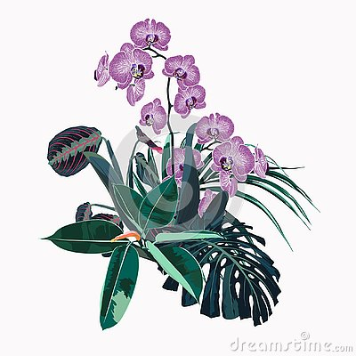 Free Tropical Orchid Flowers, Palm Leaves, Jungle Leaf, Ficus And Monstera. Royalty Free Stock Photography - 131758257