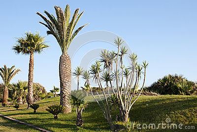Tropical palm garden