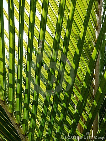 Tropical palm: nikau fronds