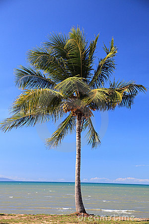 Tropical palm tree at the beach