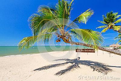 Tropical palm tree on the beach of Koh Kho Khao island