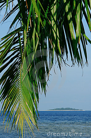 Tropical palm tree and island