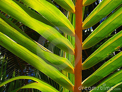 Tropical palm tree leaf