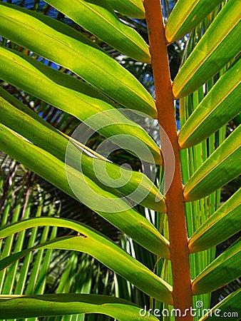 Tropical palm tree leaf