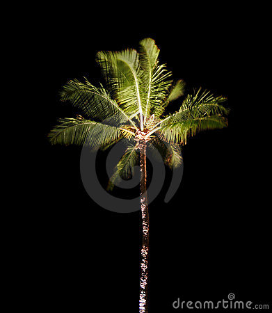 Tropical Palm Tree at Night