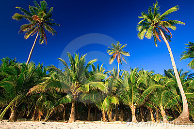 Tropical palm tree paradise