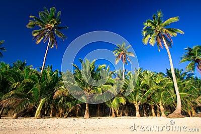 Tropical palm tree paradise