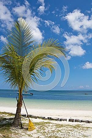 Tropical palm tree and rake