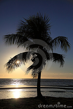 Tropical palm tree during sunset