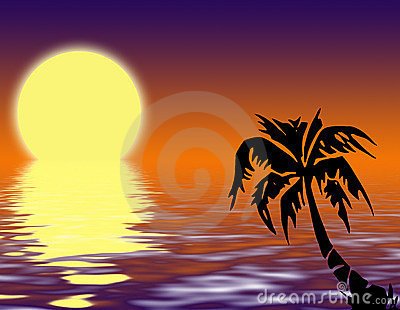 Tropical palm tree on sunset
