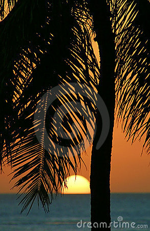 Tropical Palm Tree Sunset in Hawaii