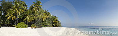Tropical palm tree and white sand Maldives
