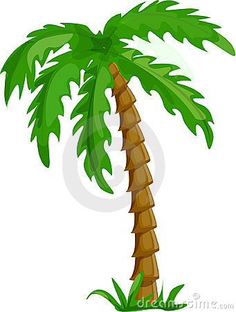 tropical palm trees isolated vector