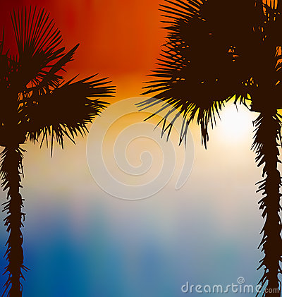 Tropical palm trees, sunset background