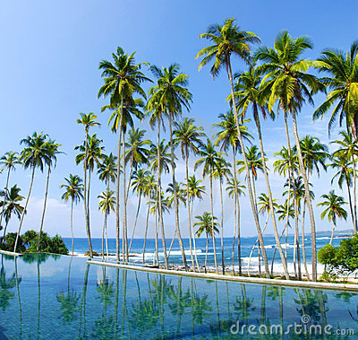 Free Tropical Palms Royalty Free Stock Photo - 22722775