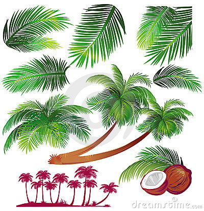 Free Tropical Palms Leaf Royalty Free Stock Photography - 9589817