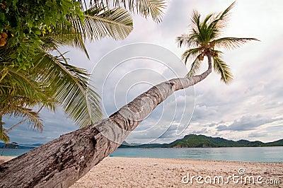 Tropical paradice