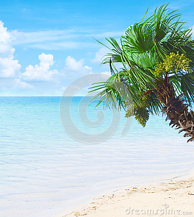Tropical paradise with azure waters and palm