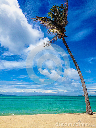 Free Tropical Paradise Beach Stock Images - 38168024