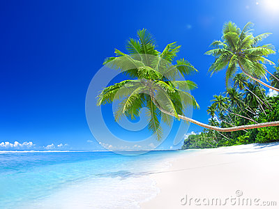 Tropical Paradise Beach with Palm Tree