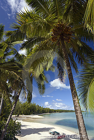 Tropical Paradise - The Cook Islands