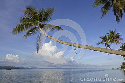 Tropical paradise island coconut palm
