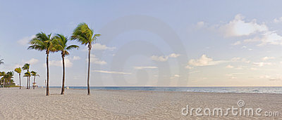Tropical paradise in Miami Beach Florida with palm