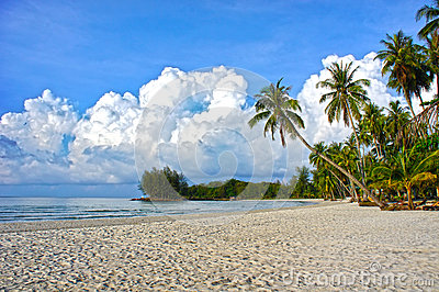 Tropical paradise nature, sea water and palm trees