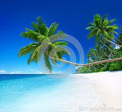 Tropical Paradise with Palm Tree