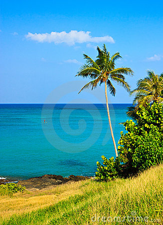 Tropical paradise, palm tree by the ocean
