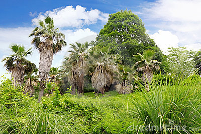 Tropical park in Arboretum ,Sochi city