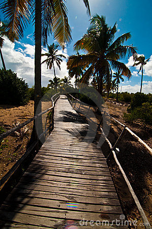 Tropical path