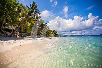 Tropical perfect beach with green palms,white sand