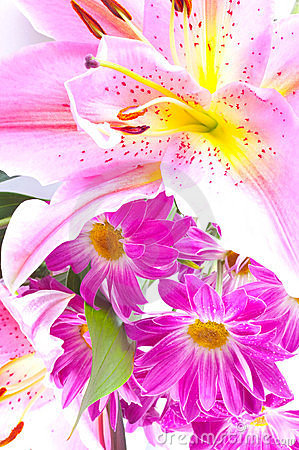 Tropical pink lily