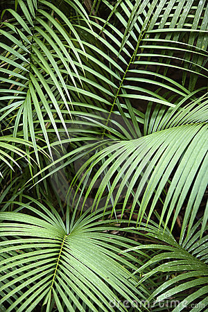 Free Tropical Plant. Stock Images - 4485514