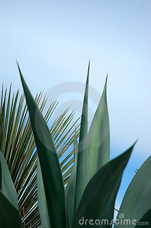 Free Tropical Plant Background Stock Image - 75261