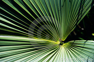 Tropical plant leaves, Reunion Island