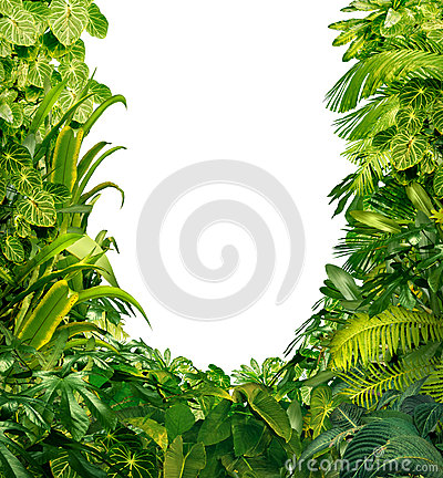Free Tropical Plants Blank Frame Stock Photos - 28557003
