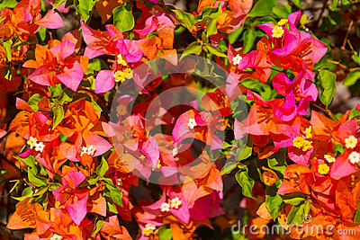 Tropical plants and flowers background