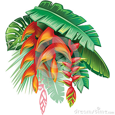 Tropical plants and Heliconia Vector Illustration