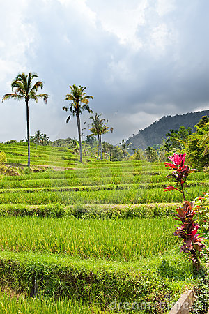 Tropical plants on a hill slope, Indonesia.