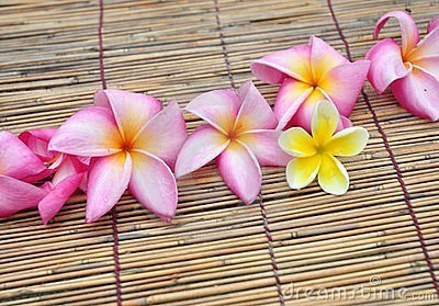 Tropical plumeria in the spa
