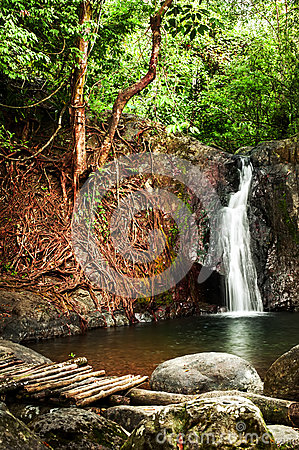 Tropical rain forest landscape with waterfall