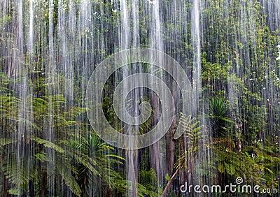 Tropical rain in the jungle